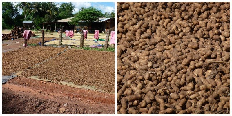 Erdnüsse Battambang