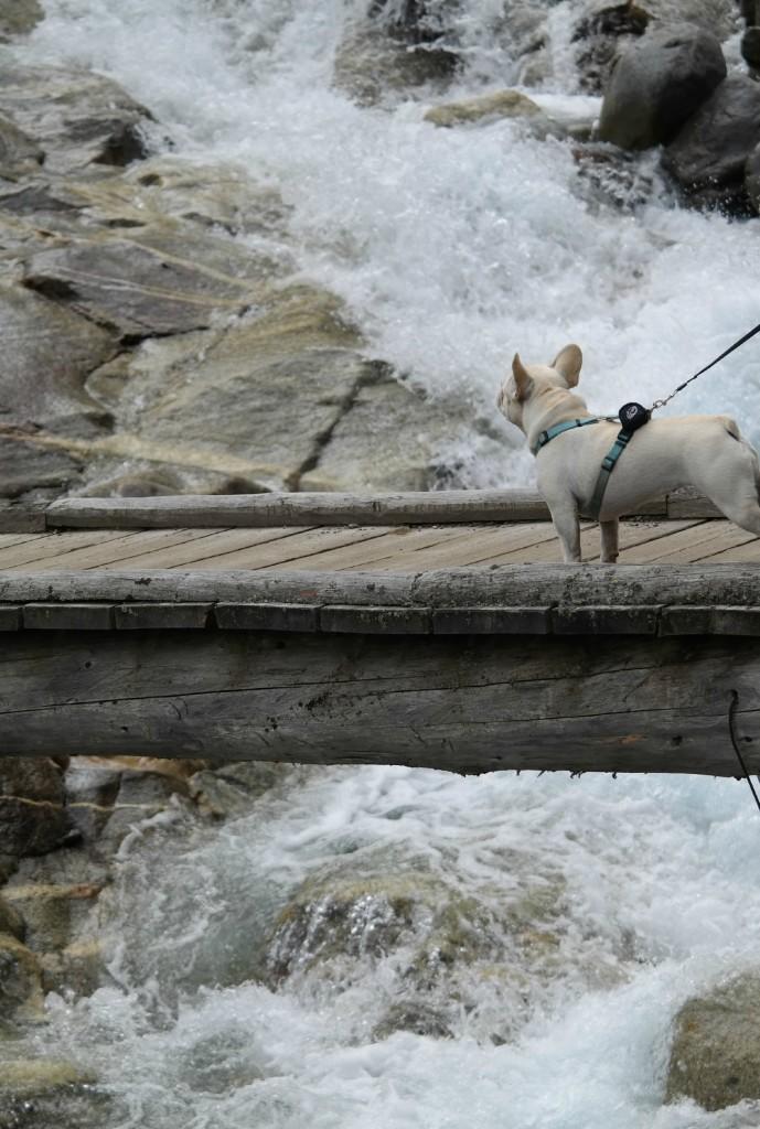 Hund und Wasserfall
