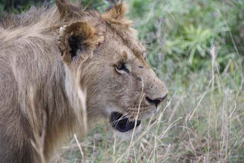 Kenia 2012 201 (1)