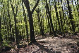 wandern in hessen