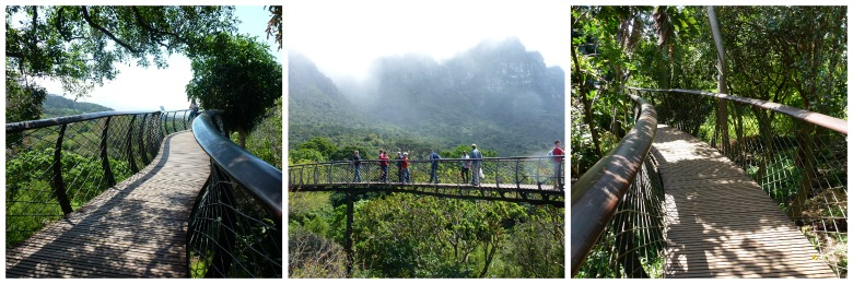 Centenary Tree Canopy Tree Walkway capetown