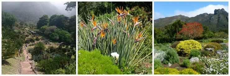 botanical garden capetown