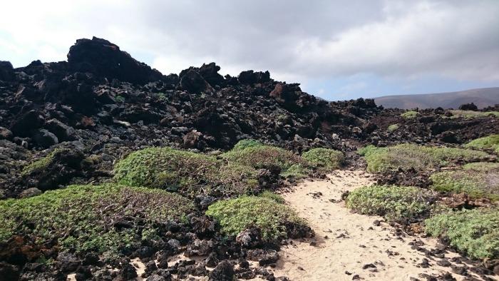 Lanzarote Natur