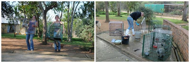 Aufgaben beim Volunteering Projekt in Südafrika