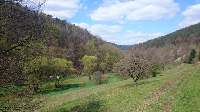 Dimbacher Buntsandstein Höhenweg