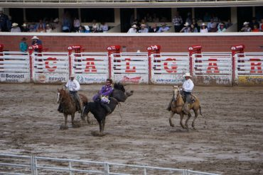 Rodeo Calgary Stampede 2016