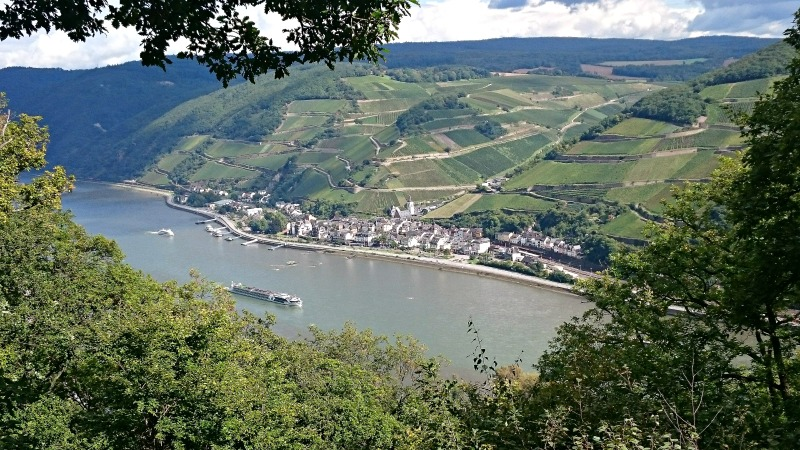 Rheinblick